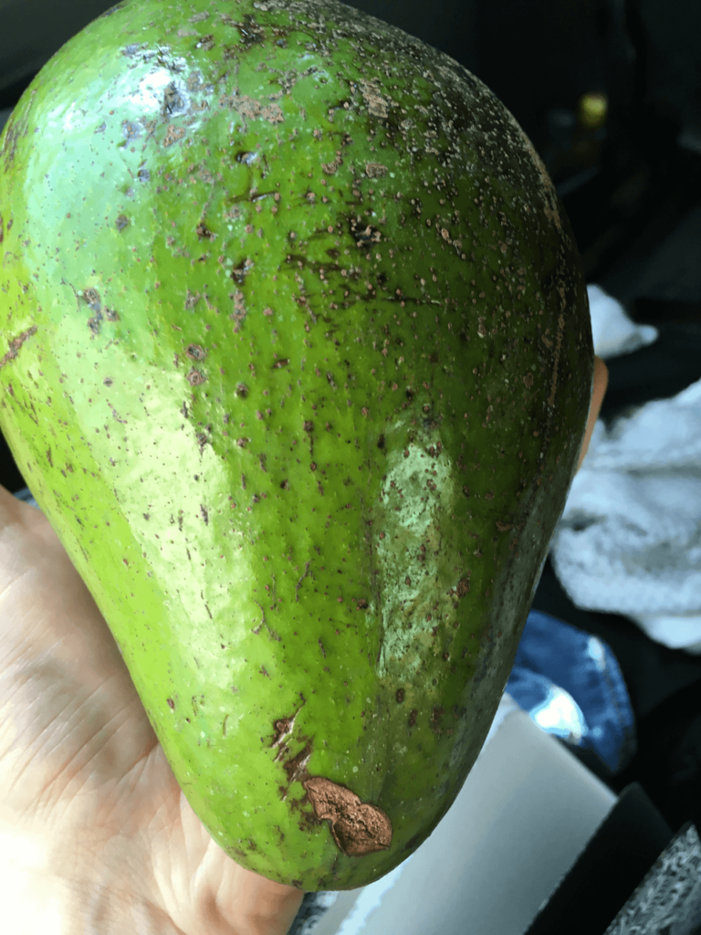 specialty coffee in peru_huge avocados