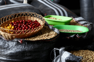 specialty coffee in Peru_aproeco_coffee cherries and beans